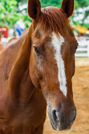 Close-up portrait of horse in ranch