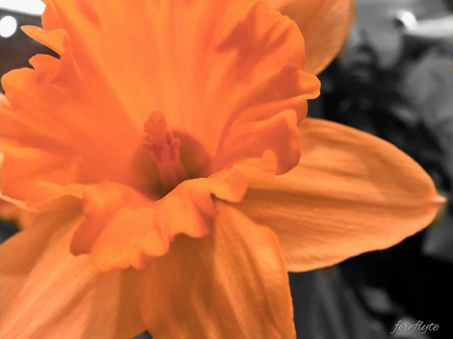 Flowers Spring Orange Colorsplash WeLoveNature  EE_Daily: Orange Tuesday