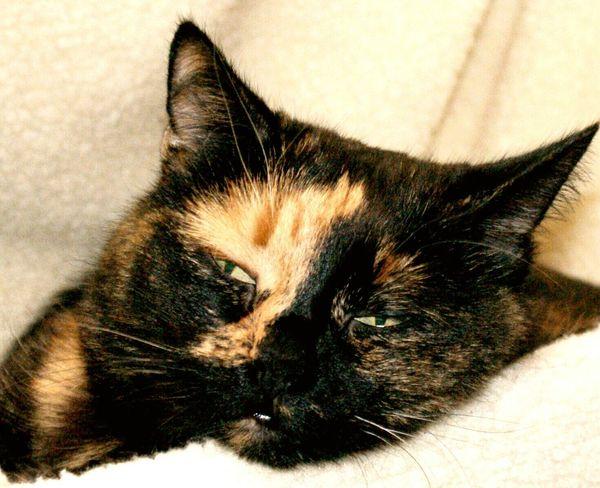 Cat Sleepy Pet Animal Aloof Eye Patch Split Face Split Personality