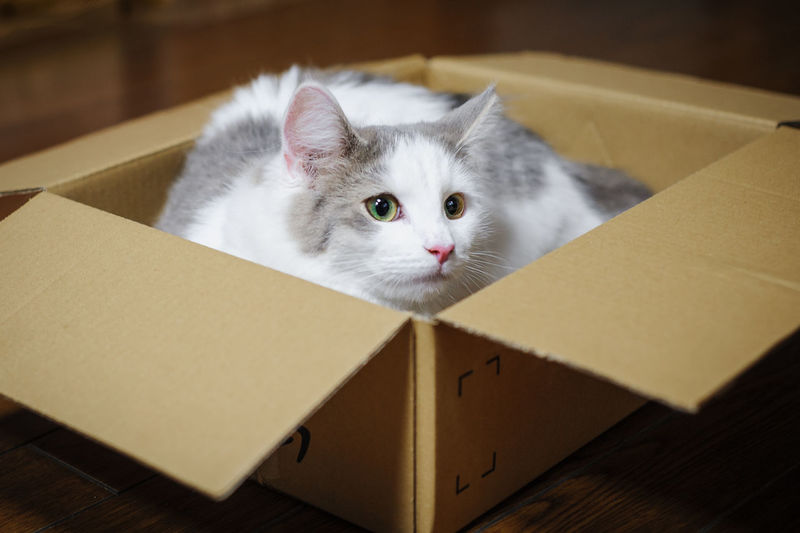 Close-up of cat in box at home