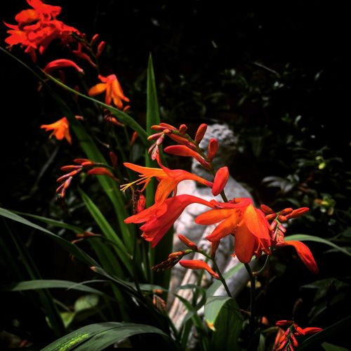 Beauty In Nature Blooming Close-up Day Flower Flower Head Fragility Freshness Greek Greek Symbols Growth Nature No People Orange Color Outdoors Petal Plant Red Statue