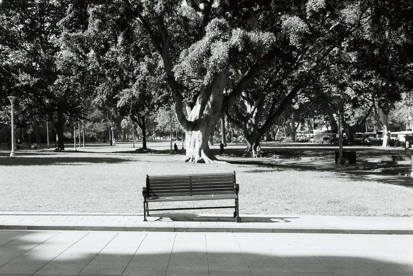 Sydney, Australia Tree Park - Man Made Space Animal Themes Bench One Animal Growth Nature Day Outdoors No People Mammal Olympus 35DC Olympus35dc Filmcamera
