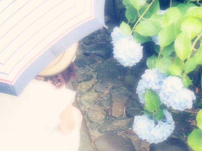 紫 陽 花 と 彼 女 紫陽花 紫陽花-hydrangea- 紫陽花2015Photo 女の子