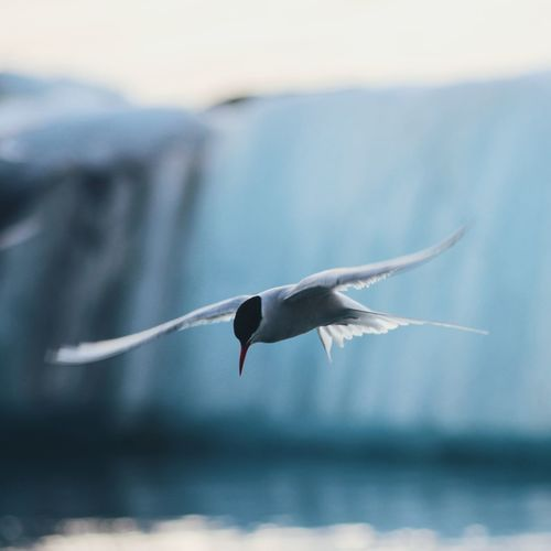Close-up of bird flying over sea against sky