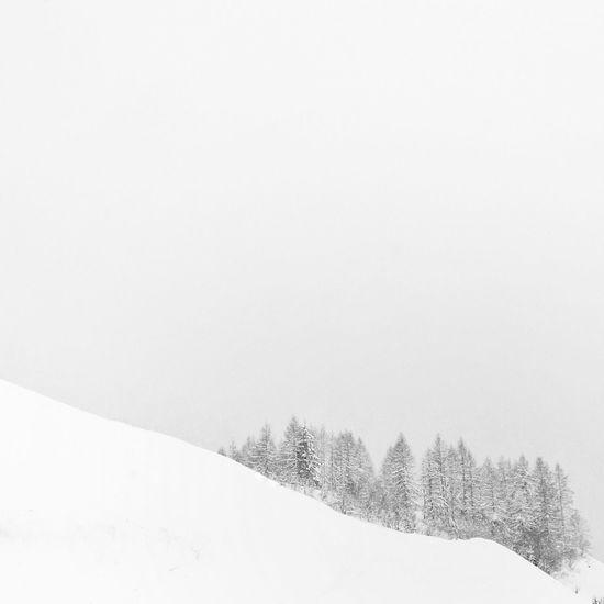Snow Mountain Trees White Minimal IPS2016White