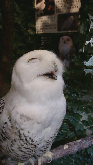 Owl No People
