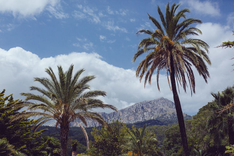 Mallorca SPAIN Beauty In Nature Cloud - Sky Date Palm Tree Day Environment Finca Growth Landscape Mountain Nature No People Outdoors Palm Leaf Palm Tree Plant Scenics - Nature Sky Sunlight Tranquil Scene Tranquility Tree Tropical Climate