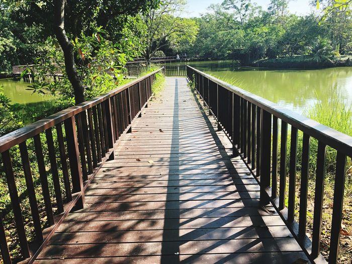 Theme Park Plant Railing Tree Nature Sunlight Bridge The Way Forward Bridge - Man Made Structure Outdoors Green Color Footbridge