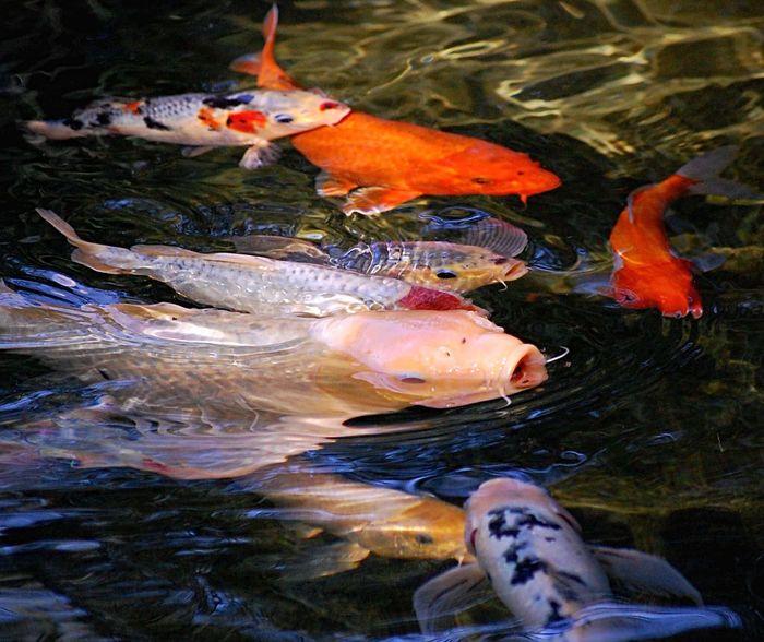 Outdoors Water Animal Animals Nature Fish