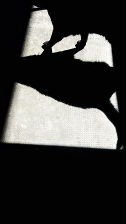 Pet Portraits Shadow No People Day Cat Cat Shadow Cat Shape Black Cat Animal Shade Sun Black Cat Collection Pets Black Catpaws Cat Photography Walking Cat