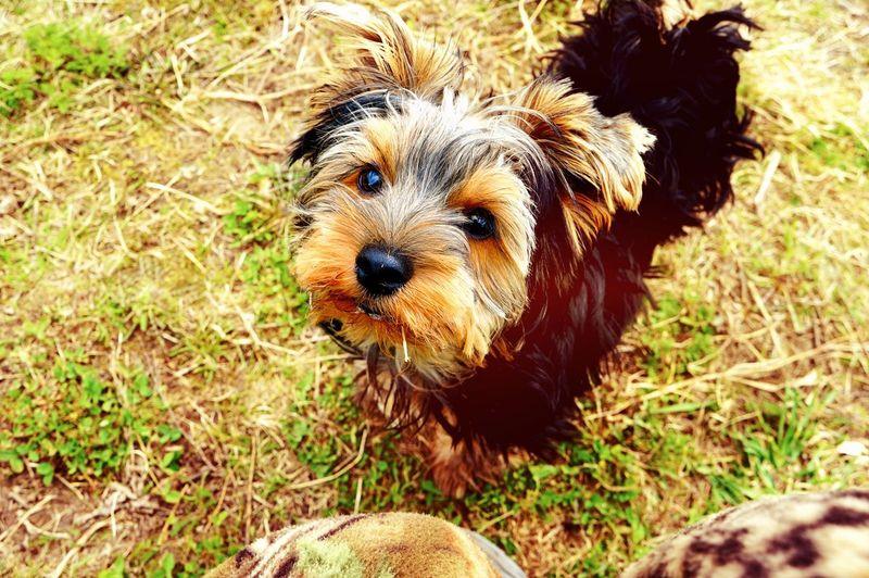 Dog Pets Animal Themes One Animal Domestic Animals Animal Head  Animal Hair No People Zoology Day
