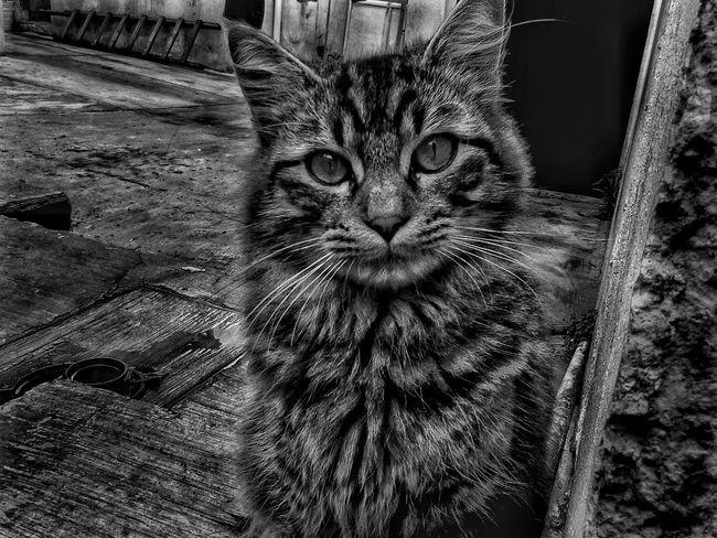 Principiante. Newtothis Sucking EyeEm Cat Cats 🐱 Loveanimals