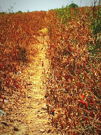 43 Golden Moments really hot alley CHWYLWY Here Belongs To Me Farm Life Fine Art Photography The Essence Of Summer
