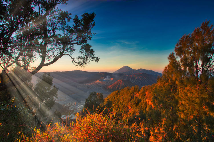 Mount Bromo, is an active volcano and part of the Tengger massif, in East Java, Indonesia Tree Mountain Scenics - Nature Plant Beauty In Nature Sky Tranquil Scene Tranquility Environment Nature Landscape No People Orange Color Non-urban Scene Autumn Land Mountain Range Sunset Idyllic Outdoors Mountain Peak