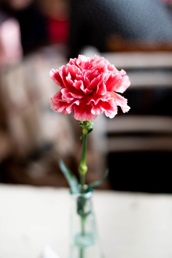 Flower Flowering Plant Plant Freshness Vulnerability  Beauty In Nature Fragility Close-up Pink Color Petal Flower Head Nature Focus On Foreground Vase Inflorescence No People Indoors  Growth Plant Stem Flower Arrangement Bouquet