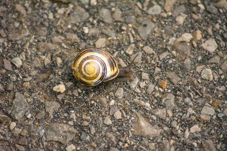 A common snail - coming out in rainy autumn weather Snail Animal Animal Body Part Animal Shell Animal Themes Animal Wildlife Animals In The Wild Brown Close-up Day Gastropod High Angle View Invertebrate Land Mollusk Nature No People One Animal Outdoors Shell Snail Solid