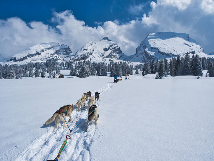 View of huskies on snow covered mountains against sky