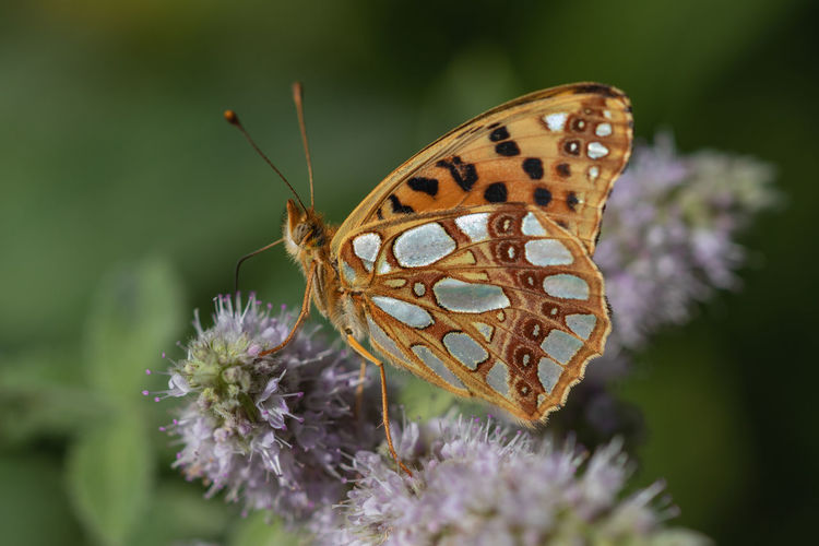 Animal Animal Wildlife Animal Wing Beauty In Nature Butterfly Butterfly - Insect Close-up Focus On Foreground Fragility Insect Nature No People One Animal Outdoors