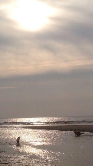 Ein Tag Am Meer  Hugos World Family Schroeschild
