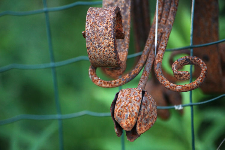 Focus On Foreground Rusty Metal Close-up No People Day Nature Brown Green Color Weathered Outdoors Plant Part Deterioration Fence Detail Curved  Plant