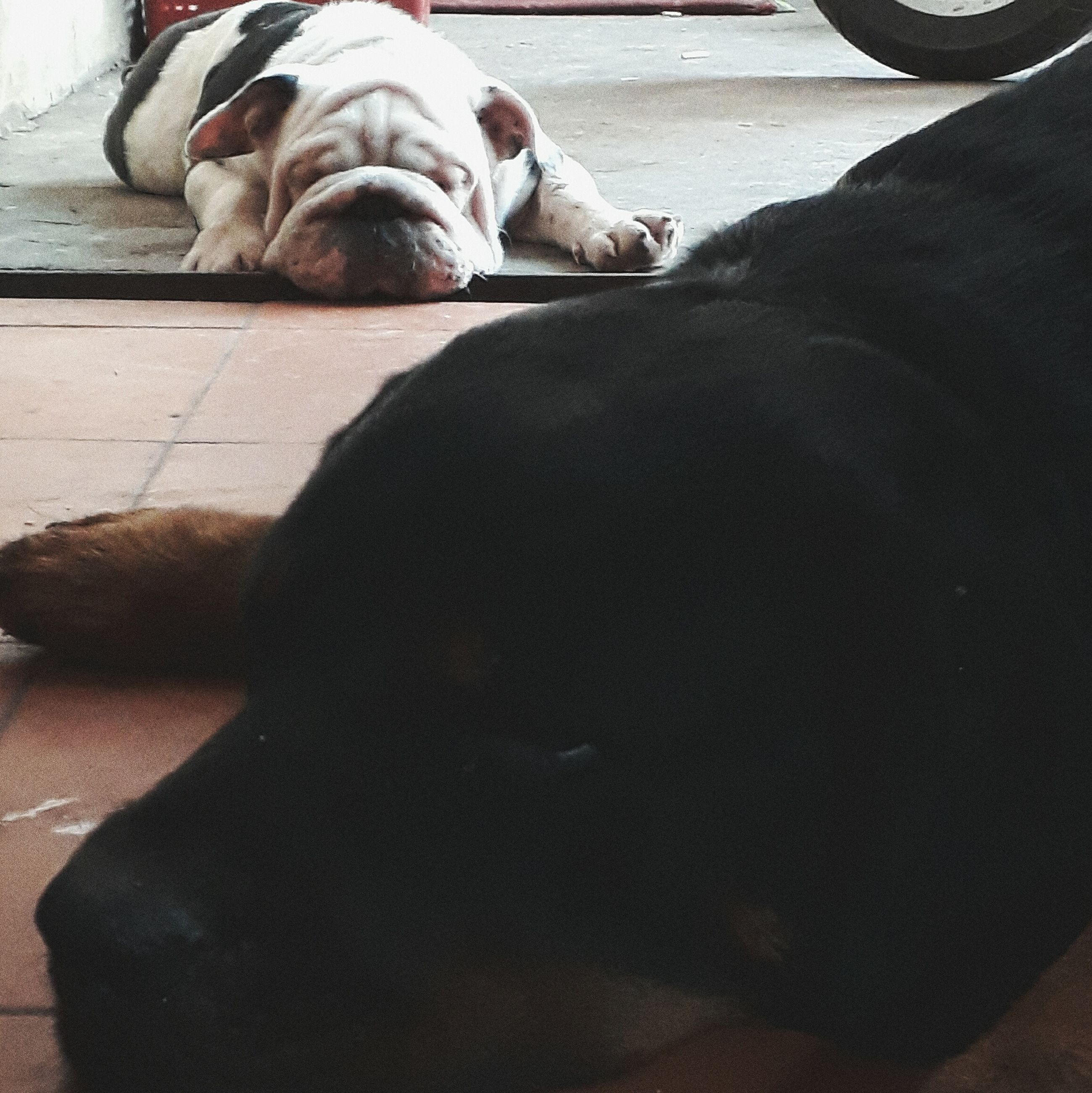 dog, pets, one animal, domestic animals, animal themes, mammal, sleeping, indoors, relaxation, lying down, day, no people, close-up