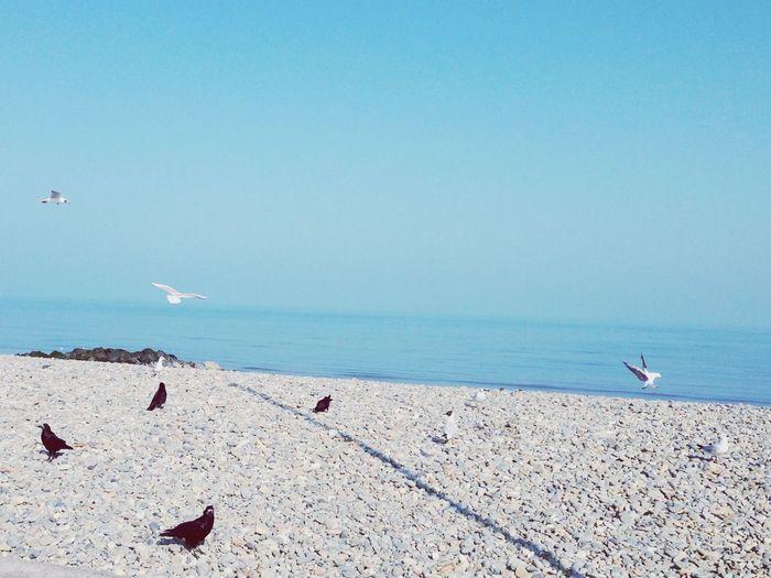 Birds at beach against clear sky