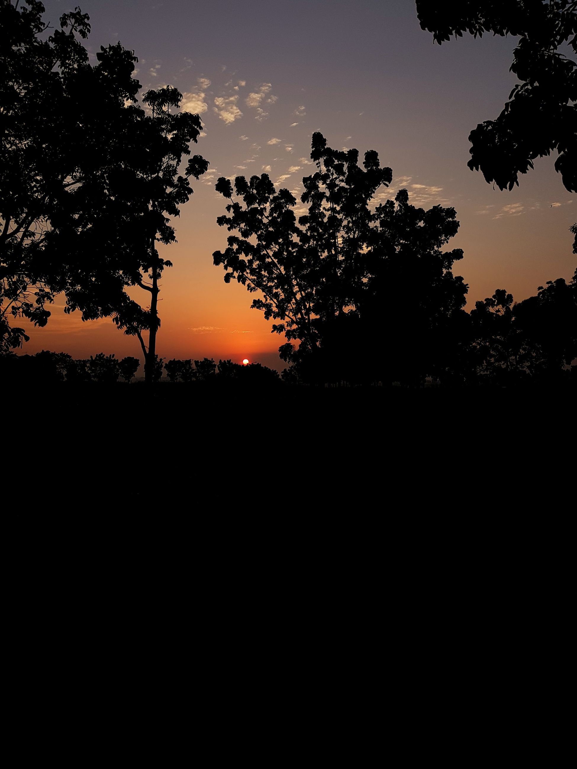 tree, sunset, silhouette, nature, beauty in nature, sky, scenics, tranquil scene, tranquility, landscape, orange color, growth, no people, outdoors, day