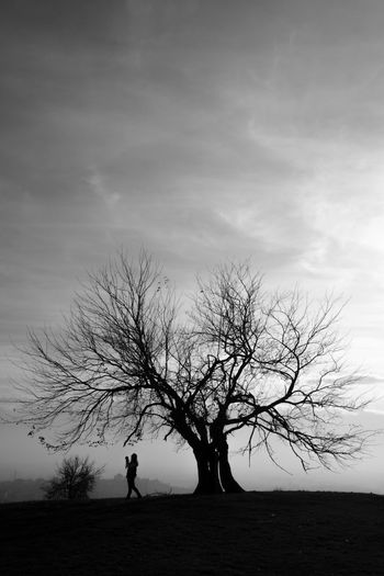 Photographer and tree silhouette under dramatic sky. Tree Sky One Person Silhouette Cloud - Sky Land Plant Beauty In Nature Bare Tree Field Nature Tranquility Standing Tranquil Scene Scenics - Nature Environment Landscape Outdoors Real People Isolated Fine Art Photography Blackandwhite Black & White Ways Of Seeing Branches