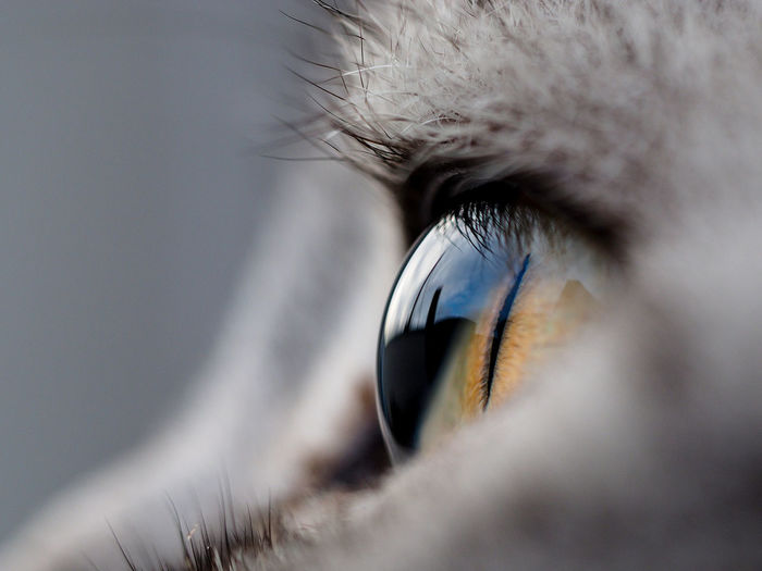 Extreme close up of cat eye