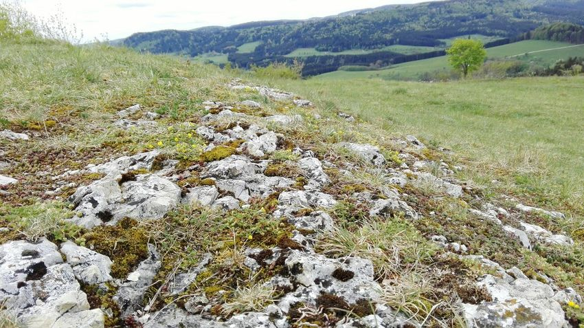 albsteig a beautiful hiking trail in the south of Germany Stone High Section Mountain Grass Rocks Springtime Meadow Pasture Albsteig Schwäbische Alb Hiking Hiking Trail Mountain Range Growing Grazing