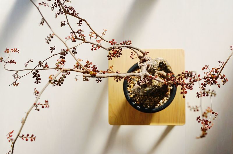 Close-up of flowering plants on table against wall