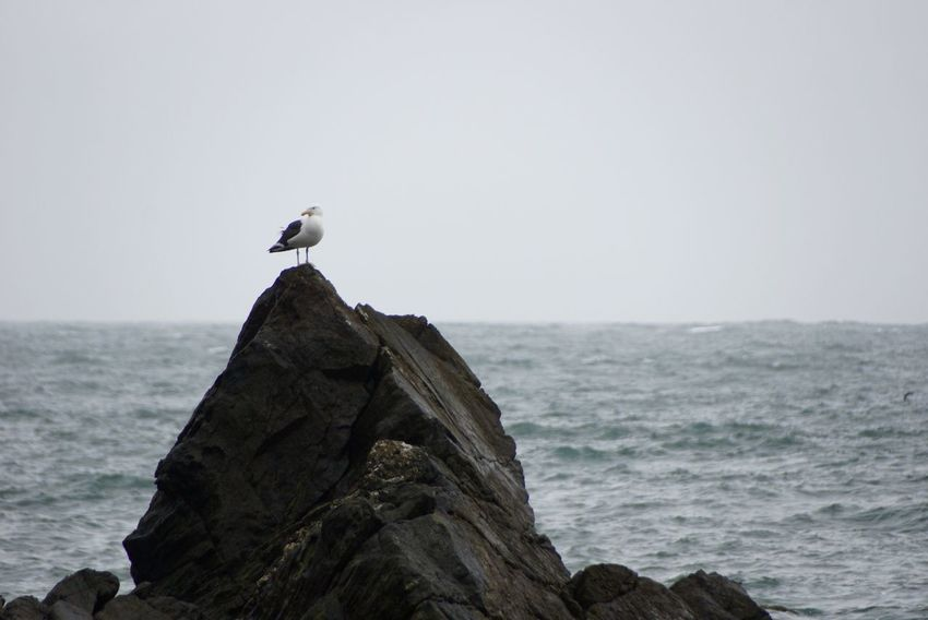 Beauty In Nature Bird Day Focus On Foreground Horizon Over Water Idyllic Nature No People Non-urban Scene Ocean Outdoors Perching Rock Rock - Object Scenics Sea Seagull Sky Tranquil Scene Tranquility Wildlife Wooden Post