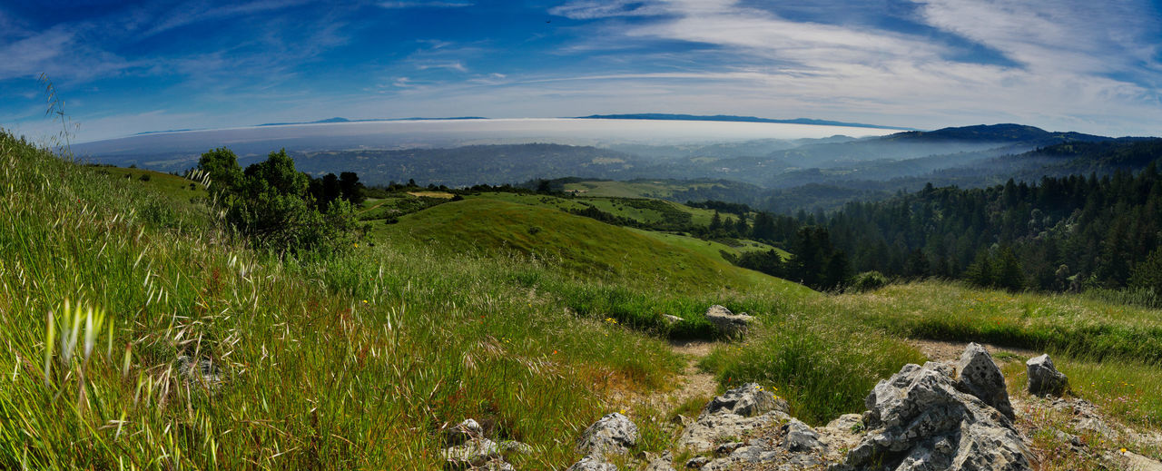 Looking down towards south bay from Windy Hill Open Space Preserve. Small cloud/fog inversion just burning off. Panoramic. Grass Landscape Photography Nature Panoramic Clouds Fog No People Panoramic Photography Rocks Wide Shot