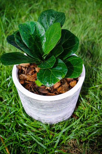 High angle view of potted plant on field