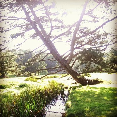 Walshingham Walshinghamgrounds Walshinghamabbey Grounds river green river stream tree sunlight footpath HTC htc1 dayout