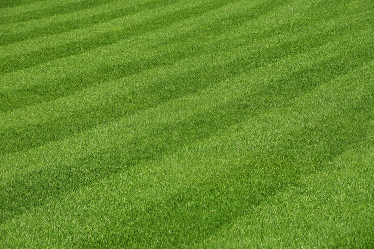 Green grass area lines, background Backgrounds Beauty In Nature Day Field Freshness Full Frame Grass Grass Area Green - Golf Course Green Color Green Color Growth High Angle View Lawn Lawn Art LINE Nature Nature Nature_collection No People Outdoors Rural Scene Sport Sward