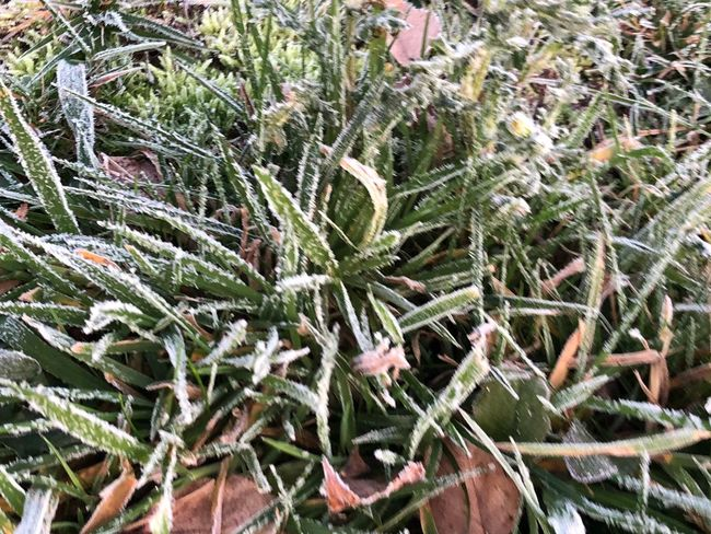 Plant Growth Green Color Nature Day Leaf Winter Close-up Plant Part No People Beauty In Nature Cold Temperature Frozen Backgrounds Outdoors Tranquility Ice