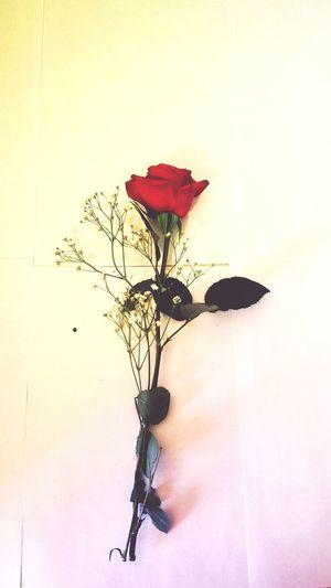 Gül Koku çiçek Aşk Sevgili Gül Romantik First Eyeem Photo