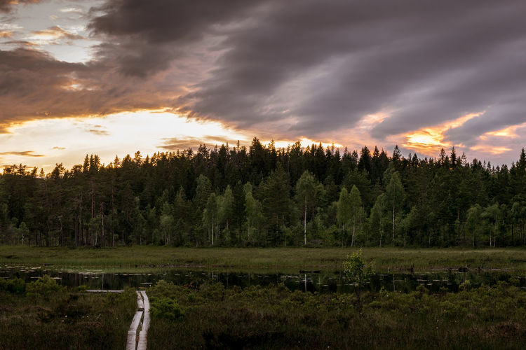 Ånnaboda, outside Örebro, Sweden Beauty In Nature Cloud - Sky Day EyeEm Gallery EyeEm Nature Lover EyeEmNewHere Forest Growth Landscape Nature No People Outdoors Scenics Sky Sunset The Great Outdoors - 2017 EyeEm Awards The Week On Eyem Tranquil Scene Tranquility Tree