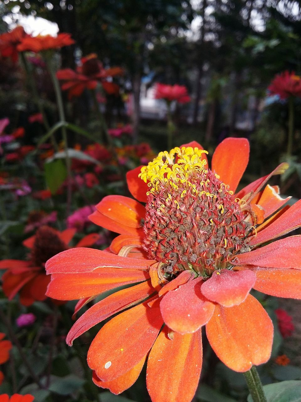 flower, freshness, petal, growth, beauty in nature, nature, orange color, plant, flower head, day, fragility, focus on foreground, outdoors, no people, blooming, close-up, water