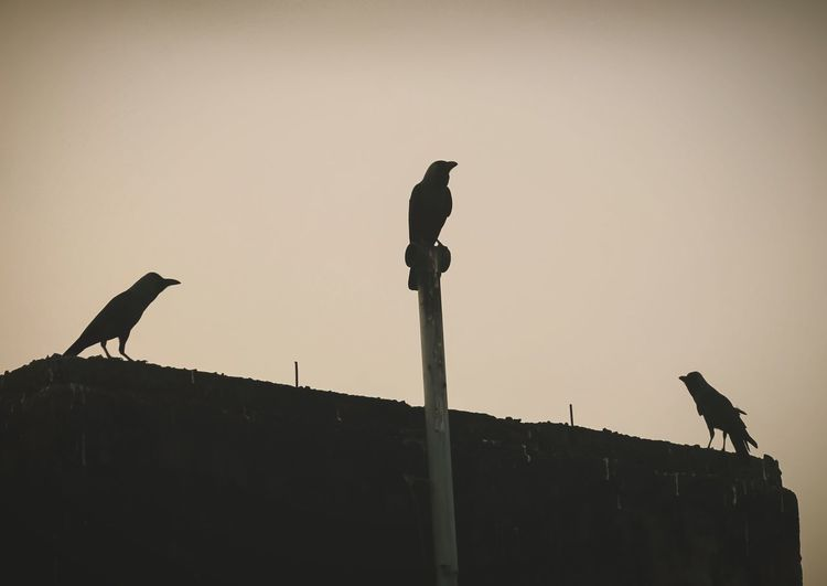 Low angle view of birds perching on pole