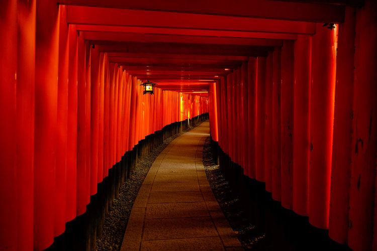 Footpath amidst torii gates