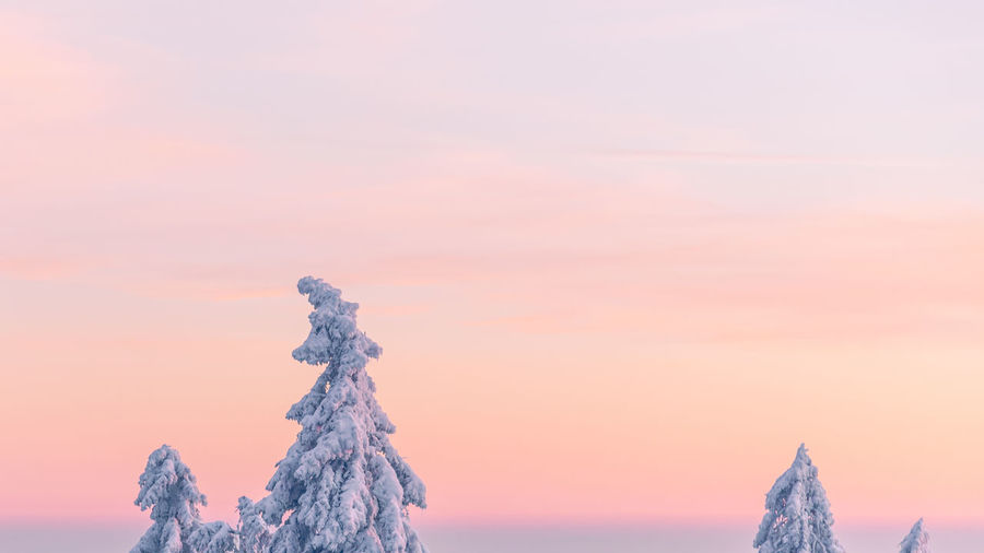 Snow covered tree against sky during sunset