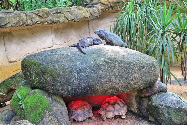 reptiles Reptiles Wildlife Iguana Reptile Tortoise Shell Tortoise Sea Life Close-up