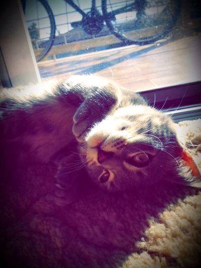 Cat Kitteh :) Yuki & Me Kittehlove First Eyeem Photo