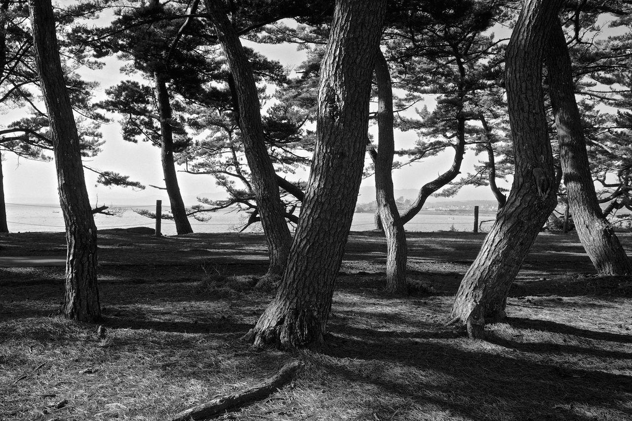 Trees At Park By Lake