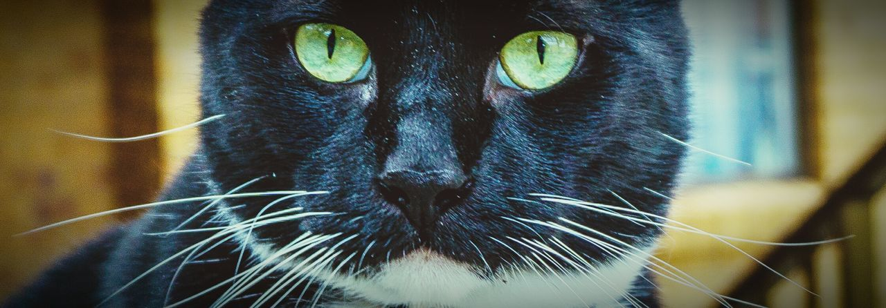 A6000 Pets Cat Eyes Pet Photography  Cats Sony A6000