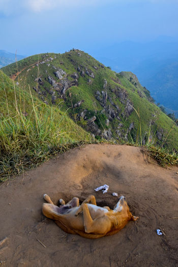 Dog chilling at Little Adams Peak Animal Nature Mountain Sri Lanka Dog Landscape