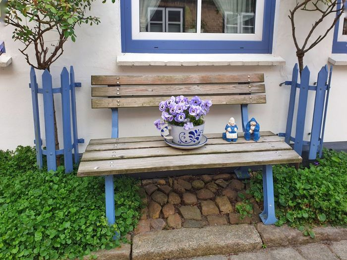 Potted plant on bench outside house