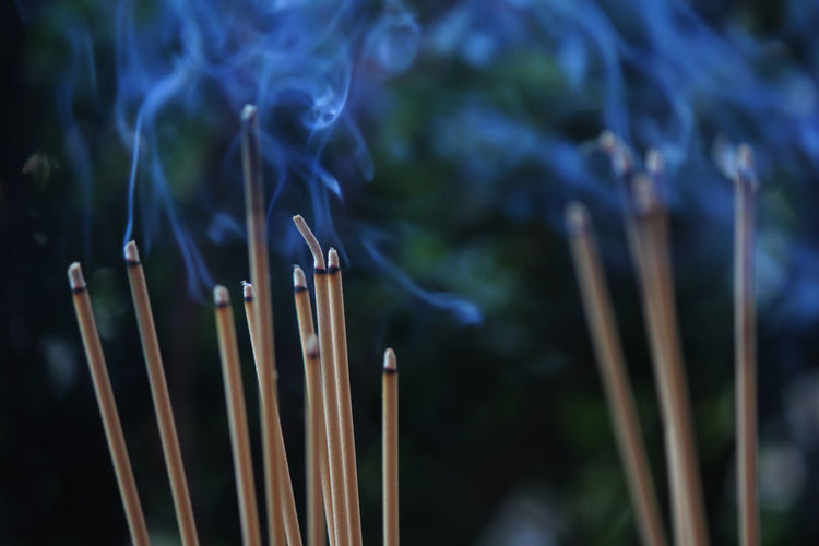 Close-up of burning incenses outdoors